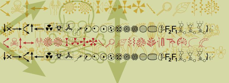 Biosymbols™ LT